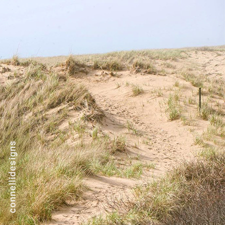 Sand Dunes at Block Island National Wildlife Refuge