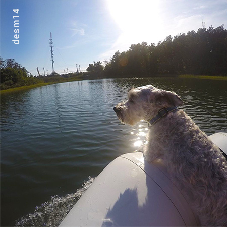 Dog on a Boat in the Upper Great Salt Pond