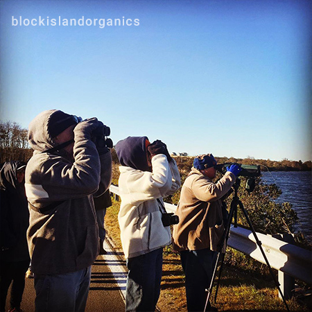 Three Persons Watching Birds on Block Island